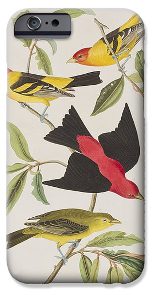 Scarlet iPhone 6s Case - Louisiana Tanager Or Scarlet Tanager  by John James Audubon
