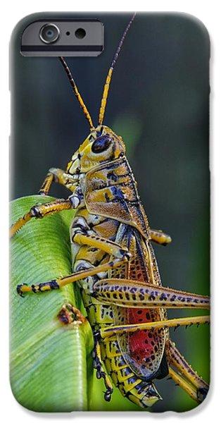 Lubber Grasshopper IPhone 6s Case