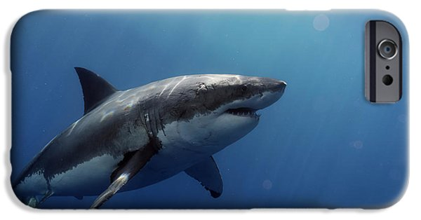 Lucy Posing At Isla Guadalupe IPhone 6s Case by Shane Linke