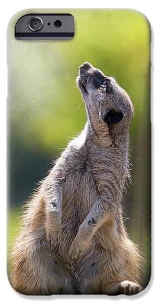 Magical Meerkat IPhone 6s Case