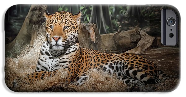Leopard iPhone 6s Case - Majestic Leopard by Scott Norris