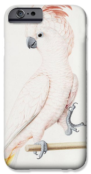 Cockatoo iPhone 6s Case - Major Mitchell's Cockatoo by Nicolas Robert