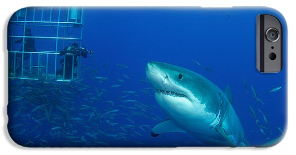 Scuba Diver iPhone 6s Case - Male Great White Shark And Divers by Todd Winner