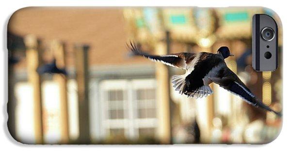 Cedar Waxing iPhone 6s Case - Mallard Duck And Carousel by Geraldine Scull