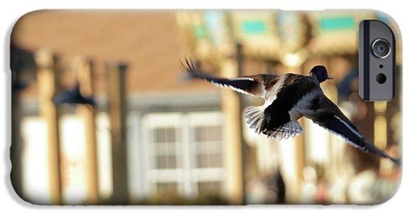 Mallard Duck And Carousel IPhone 6s Case by Geraldine Scull