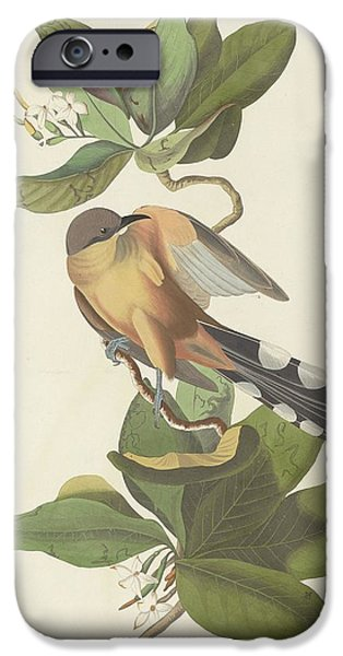 Mangrove Cuckoo IPhone 6s Case by Anton Oreshkin