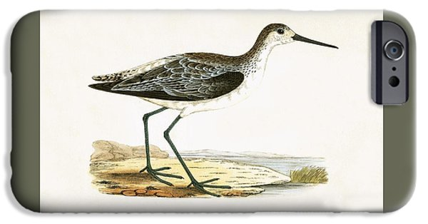 Sandpiper iPhone 6s Case - Marsh Sandpiper by English School