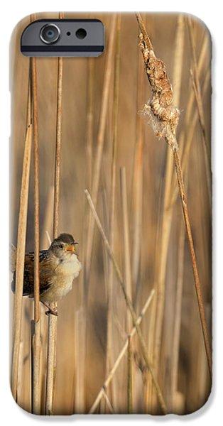 Marsh Wren IPhone 6s Case