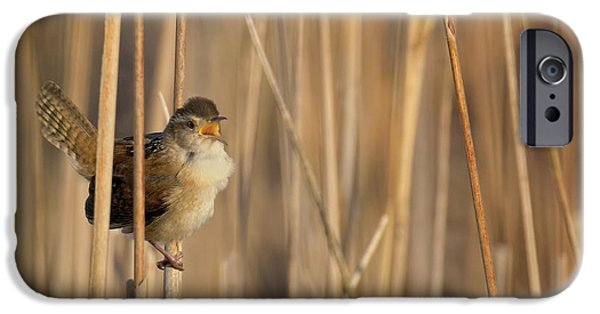 Marsh Wren Square IPhone 6s Case by Bill Wakeley