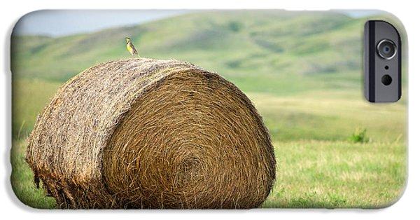 Meadowlark Heaven IPhone 6s Case by Todd Klassy