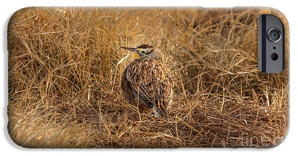 Meadowlark Hiding In Grass IPhone 6s Case by Robert Frederick