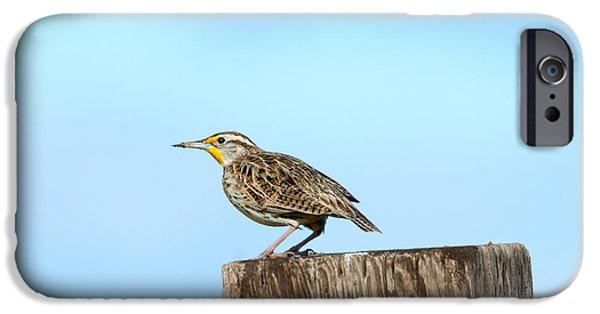Meadowlark Roost IPhone 6s Case by Mike Dawson