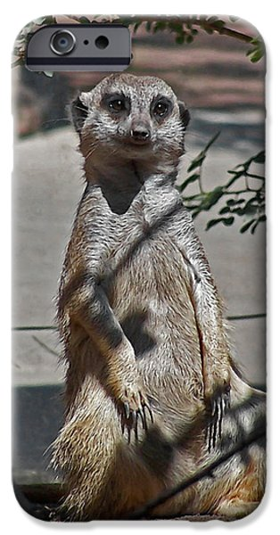 Meerkat 2 IPhone Case by Ernie Echols