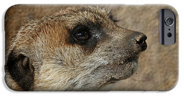 Meerkat 3 IPhone Case by Ernie Echols
