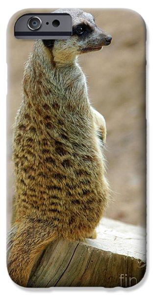 Meerkat Portrait IPhone 6s Case