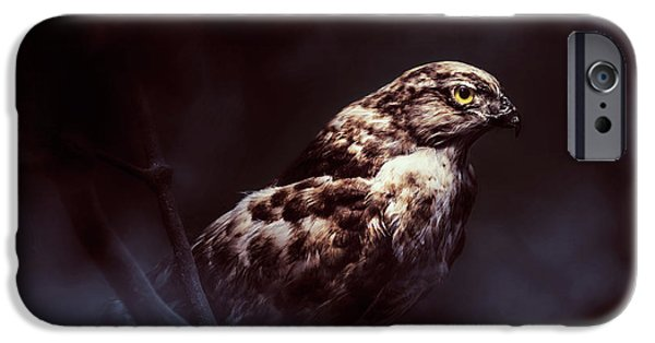 Hawk iPhone 6s Case - Midnight Hawk by Jorgo Photography - Wall Art Gallery