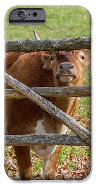 IPhone 6s Case featuring the photograph Moo by Bill Wakeley