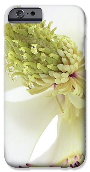 IPhone 6s Case featuring the photograph Morning Dew On The Magnolia by JC Findley