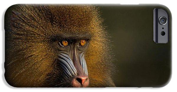 Ape iPhone 6s Case - Mother's Finest by Jacky Gerritsen