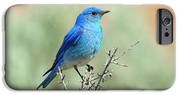 Mountain Bluebird Beauty IPhone 6s Case