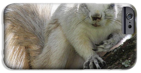 Mr. Inquisitive II IPhone 6s Case by Betsy Knapp