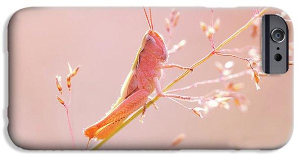 Grasshopper iPhone 6s Case - Mr Pink - Pink Grassshopper by Roeselien Raimond
