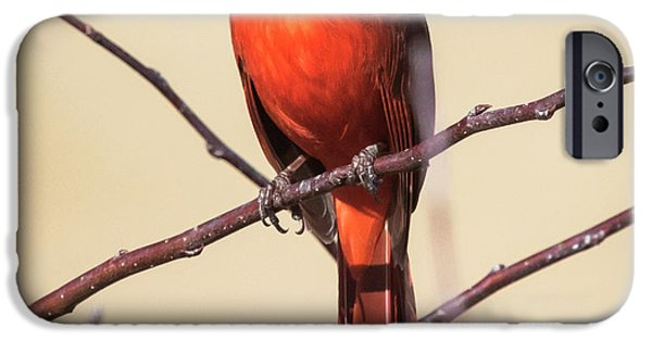 Northern Cardinal Profile IPhone 6s Case by Ricky L Jones
