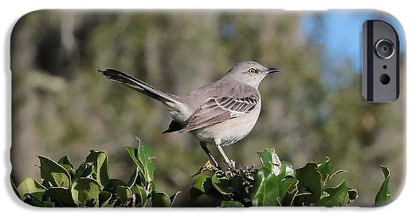 Northern Mockingbird IPhone 6s Case by Carol Groenen