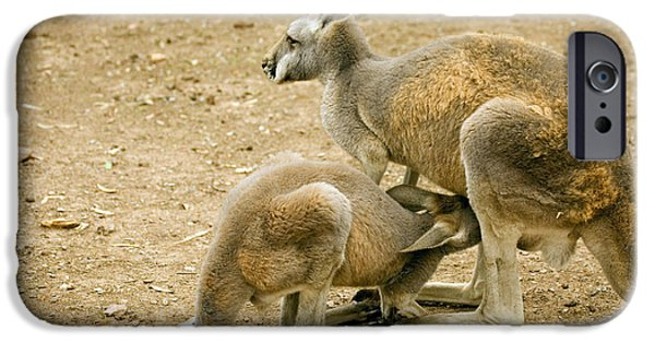 Kangaroo iPhone 6s Case - Nursing Time by Mike  Dawson