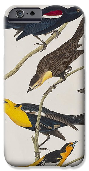Nuttall's Starling Yellow-headed Troopial Bullock's Oriole IPhone 6s Case by John James Audubon