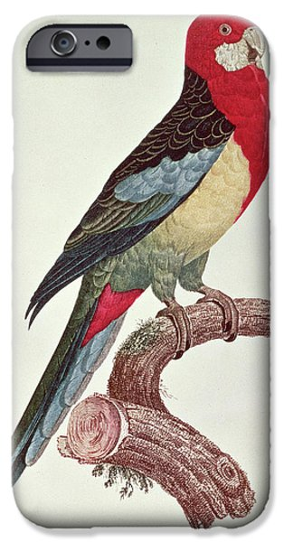 Macaw iPhone 6s Case - Omnicolored Parakeet by Jacques Barraband