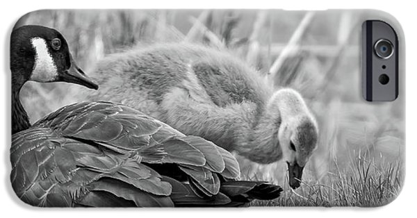 Gosling iPhone 6s Case - On Mother's Day Bw by Steve Harrington
