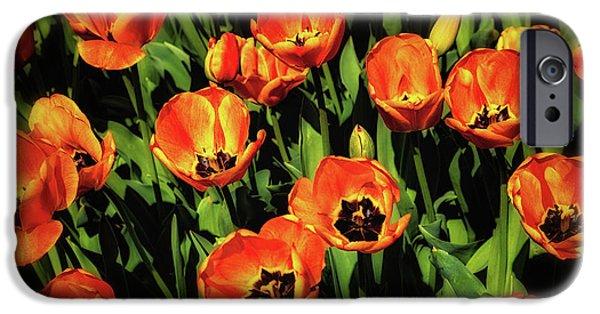 Tulip iPhone 6s Case - Open Wide - Tulips On Display by Tom Mc Nemar