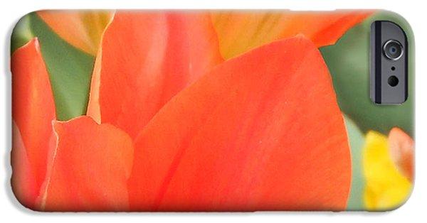 Orange Emperor Tulips IPhone 6s Case