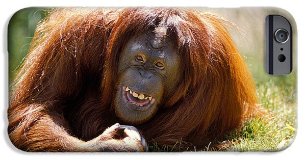 Orangutan In The Grass IPhone 6s Case by Garry Gay