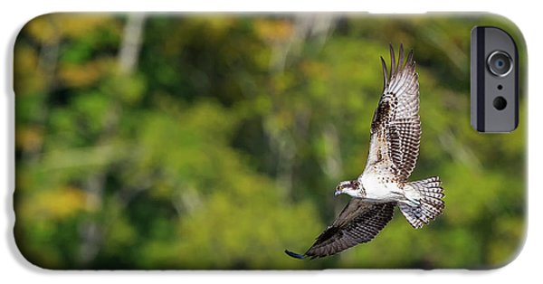 Osprey IPhone 6s Case by Bill Wakeley