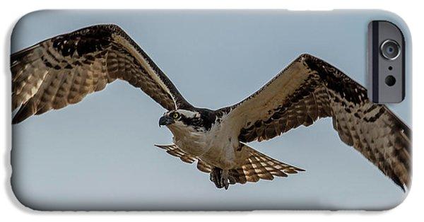 Osprey Flying IPhone 6s Case by Paul Freidlund