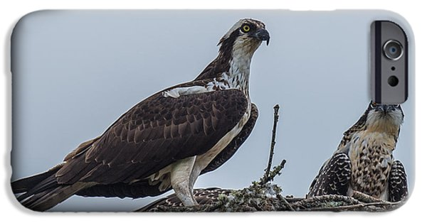 Osprey On A Nest IPhone 6s Case by Paul Freidlund