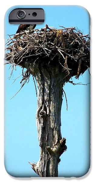 Osprey Point IPhone 6s Case by Karen Wiles