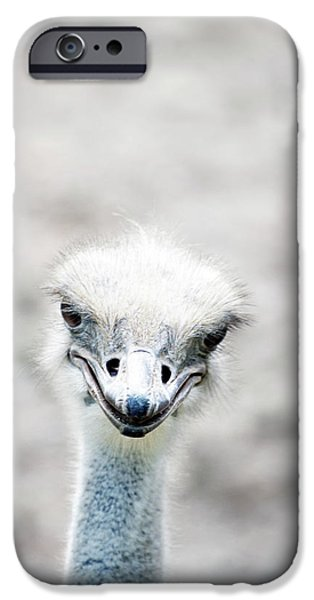 Ostrich iPhone 6s Case - Ostrich by Lauren Mancke