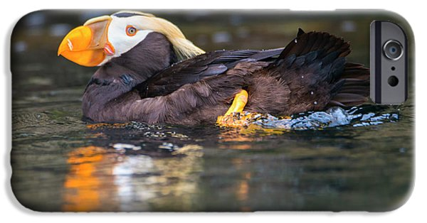Puffin iPhone 6s Case - Paddling Puffin by Mike Dawson