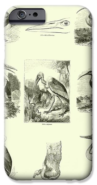 Page From The Pictorial Museum Of Animated Nature  IPhone 6s Case by English School