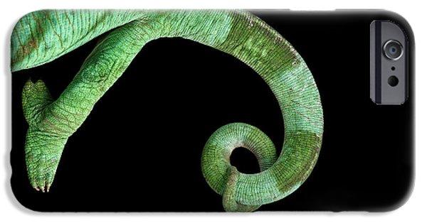 Parson Chameleon, Calumma Parsoni On Black Background, Top View IPhone 6s Case by Sergey Taran