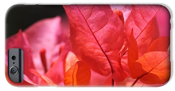 Pink And Orange Bougainvillea - Square IPhone 6s Case by Rona Black