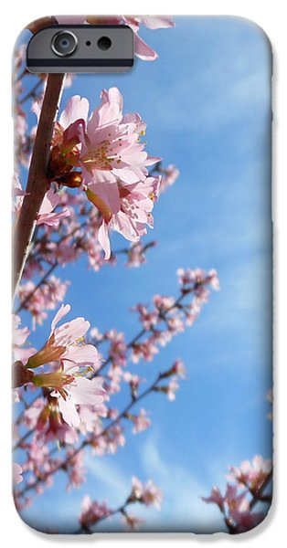 Pink Cherry Blossoms Branching Up To The Sky IPhone 6s Case