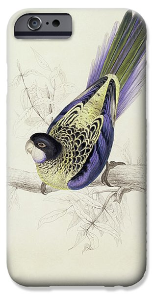 Platycercus Brownii, Or Browns Parakeet IPhone 6s Case by Edward Lear