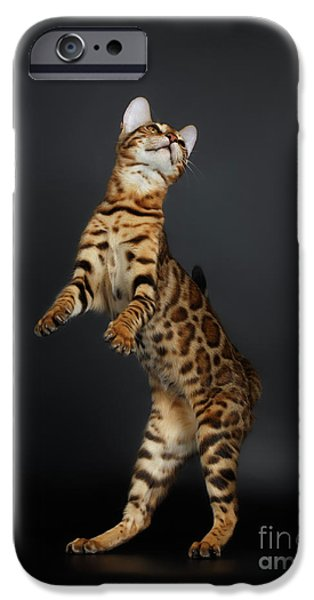 Playful Female Bengal Cat Stands On Rear Legs IPhone 6s Case by Sergey Taran