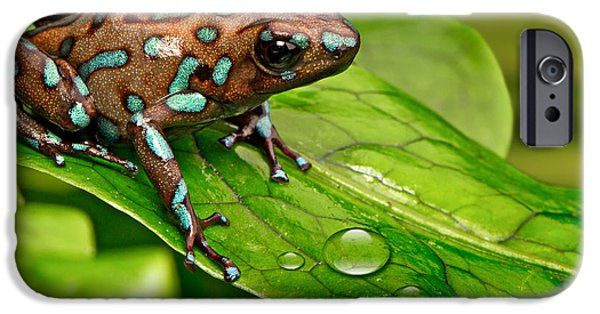 poison art frog Panama IPhone 6s Case by Dirk Ercken