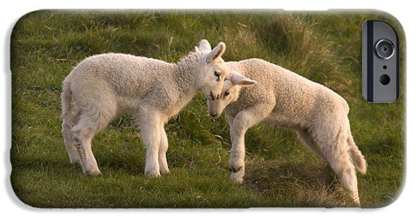 Sheep iPhone 6s Case - Poke by Angel Ciesniarska