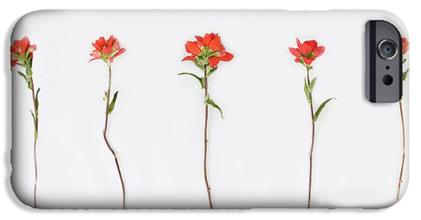 Poppy Blossoms IPhone 6s Case by Brittany Bevis